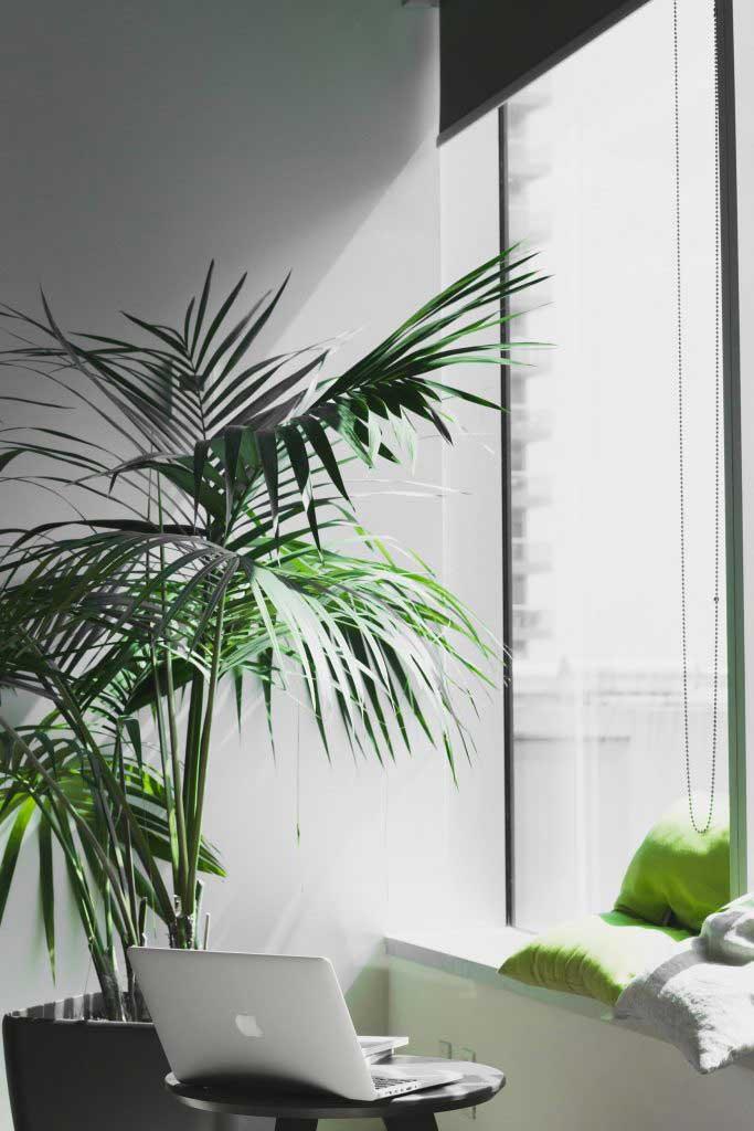 Les plantes sont très bénéfiques à la vie de l'entreprise